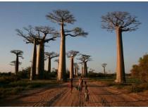 Madagascar, bijuteria Oceanului Indian